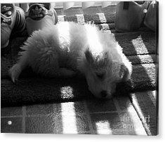 Acrylic Print featuring the photograph Lazy Days by Michael Krek