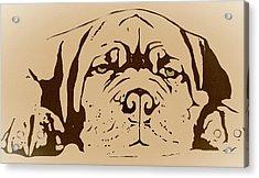Lazy Dog Acrylic Print by Cindy Edwards