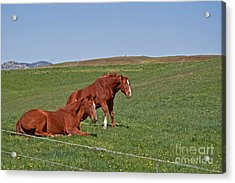 Acrylic Print featuring the photograph Lazy Horses by Valerie Garner