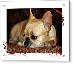 Acrylic Print featuring the photograph Lazy Paisley Afternoon by Barbara Chichester