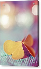 Le Papillon 03 - The Butterfly 03  Acrylic Print by Variance Collections