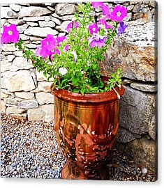 Anduze Flower Pot With Petunias Acrylic Print