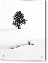 Le Solitaire Acrylic Print