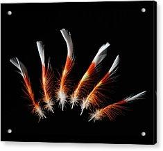 Leadbetter Cockatoo Acrylic Print