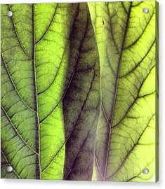 Leaf Abstract Acrylic Print by Christy Beckwith