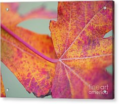 Leaf Abstract In Pink Acrylic Print by Irina Wardas