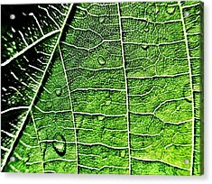 Leaf Abstract - Macro Photography Acrylic Print by Marianna Mills