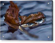 Leaf Afloat Acrylic Print by Nancy Edwards