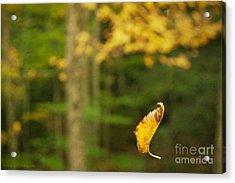 Leaf Aloft Acrylic Print