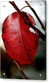 Leaf Acrylic Print by Arsen Arsovski