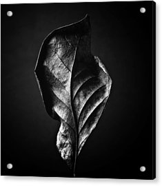 Black And White Nature Still Life Art Work Photography Acrylic Print