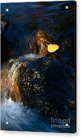 Leaf Bridge Two Acrylic Print by Vinnie Oakes