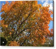 Leaf Canopy Acrylic Print