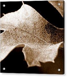 Leaf Collage 1 Acrylic Print
