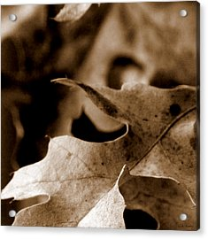 Acrylic Print featuring the photograph Leaf Collage 4 by Lauren Radke
