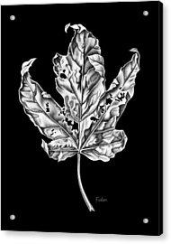 Leaf Acrylic Print by David Fedan