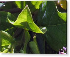 Acrylic Print featuring the photograph Leaf by Debi Singer