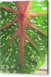 Leaf Design Acrylic Print
