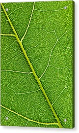 Acrylic Print featuring the photograph Leaf Detail by Carsten Reisinger