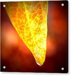 Acrylic Print featuring the photograph Leaf Drop by Candice Trimble