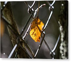 Acrylic Print featuring the photograph Leaf. by Gary Gillette