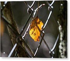 Leaf. Acrylic Print