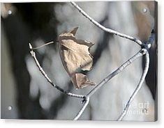 Leaf Harp Acrylic Print by Ted Guhl