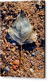 Leaf In Grit Acrylic Print by Christopher Holmes