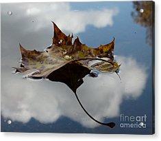 Leaf In Sky Acrylic Print