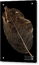 Leaf Lace Acrylic Print by Anne Gilbert
