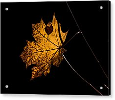 Acrylic Print featuring the photograph Leaf Leaf by Leif Sohlman