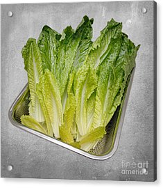 Leaf Lettuce Acrylic Print by Andee Design