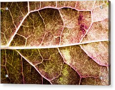 Leaf Lines Acrylic Print by Christine Smart