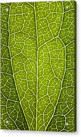Leaf Lines V Acrylic Print by Natalie Kinnear