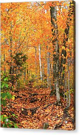 Acrylic Print featuring the photograph Leaf Littered Path by Alicia Knust