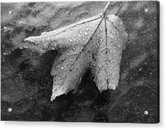 Leaf On Glass Acrylic Print