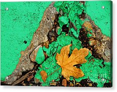 Leaf On Green Cement Acrylic Print by Amy Cicconi