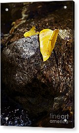 Leaf On Rock Acrylic Print by ELITE IMAGE photography By Chad McDermott