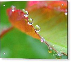 Leaf Pearls Acrylic Print