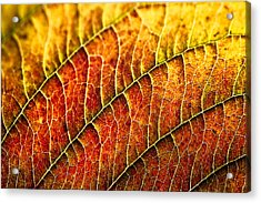 Leaf Rainbow Acrylic Print