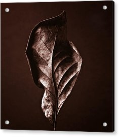 Copper Gold Red Brown Nature Still Life Art Work Photograph Acrylic Print