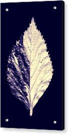 Leaf Series Twin Shade Acrylic Print by Sumit Mehndiratta
