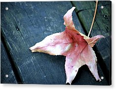 Leaf Acrylic Print by Stacie  Goodloe