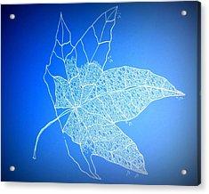 Leaf Study 1 Acrylic Print by Cathy Jacobs