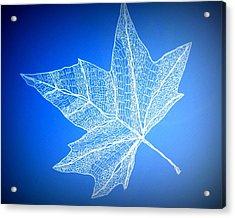 Leaf Study 3 Acrylic Print by Cathy Jacobs