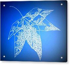 Leaf Study 4 Acrylic Print by Cathy Jacobs