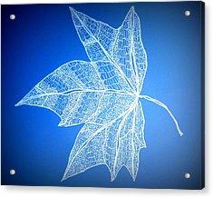 Leaf Study 5 Acrylic Print by Cathy Jacobs