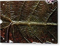 Leafage Acrylic Print by Richard Thomas