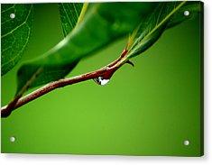 Leafdrop Acrylic Print