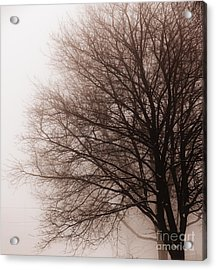 Leafless Tree In Fog Acrylic Print by Elena Elisseeva